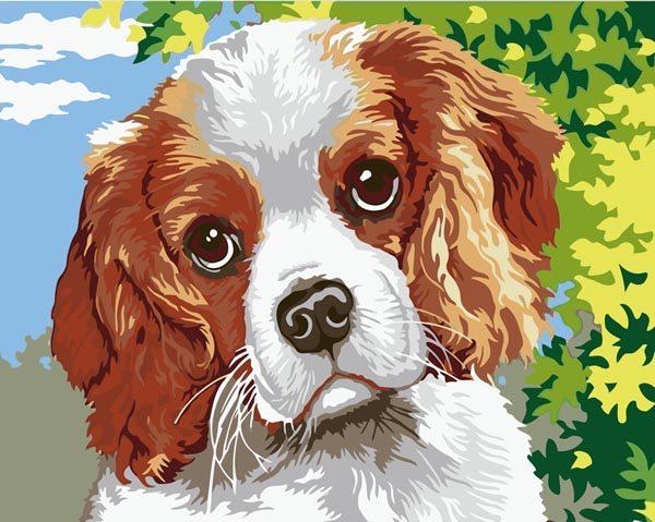 Schilderen op Nummer – Hond