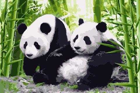 Schilderen op Nummer – Panda's